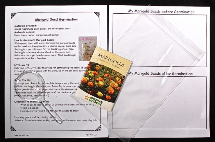 Marigold Seed germination